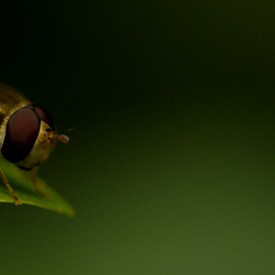 Sitting on the edge of your leaf