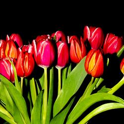 Bos tulpen