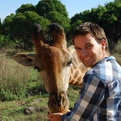 Giraffe voeren