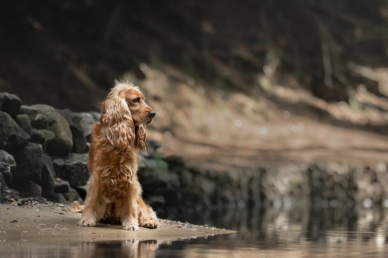 Fellow bij het water - Masterclass dog portraits (Lotte v. Alderen & Haron Haghuis)