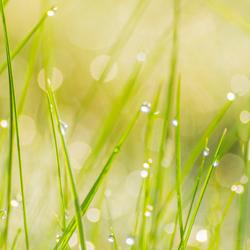lente fris - dauw in het gras