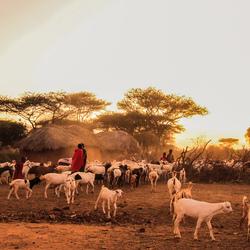 Masai bij valavond