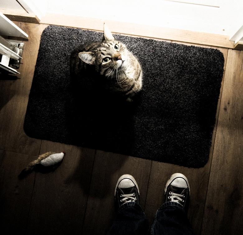 Kat wil naar buiten -