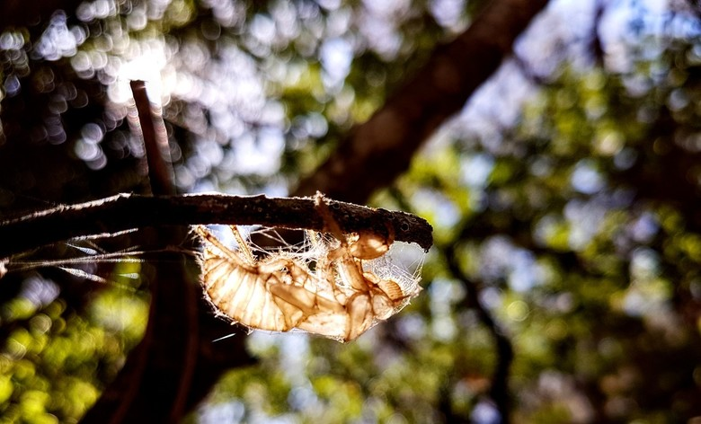 Cicade 201608
