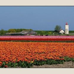 Mooiste tijd van het jaar in Westfriesland