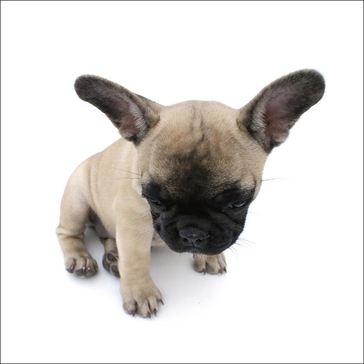 Me & My Big Ears - Joy, mijn Fransje @ 11 weekjes