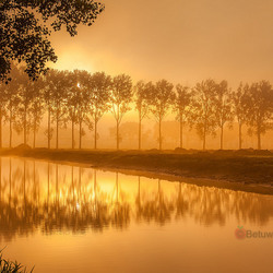 I love the Morninglight..............