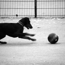 Enthousiaste hond
