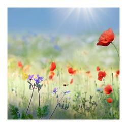 Bloemenweide met klaprozen