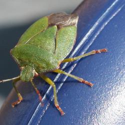 Bug op gieter