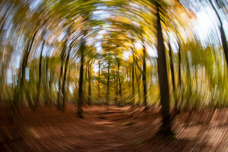 Spinning Autumn - Blijf nog even creatief in het bos.<br /> <br /> Bedankt voor de reacties op de vorige foto.<br /> Gr Johan