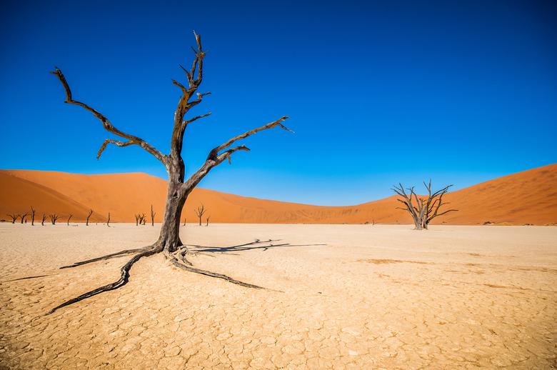 Trees of solitude - Sossusvlei, Namibie<br /> <br /> Kijk ook eens op naar mijn andere foto&#039;s:<br /> https://www.flickr.com/photos/simonvanooi