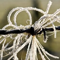 Winters prikkeldraad