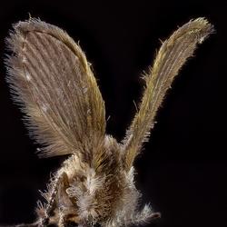 Haarbal met vleugels