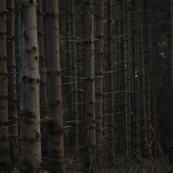 Door de bomen het bos....