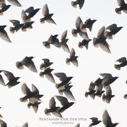 Gevlogen vleugels