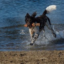 Hond geniet in het water