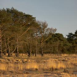 Kalmthoutse Heide,