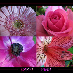 Colors  -  PINK  -