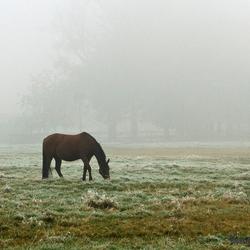 Een koude herfstmorgen 1