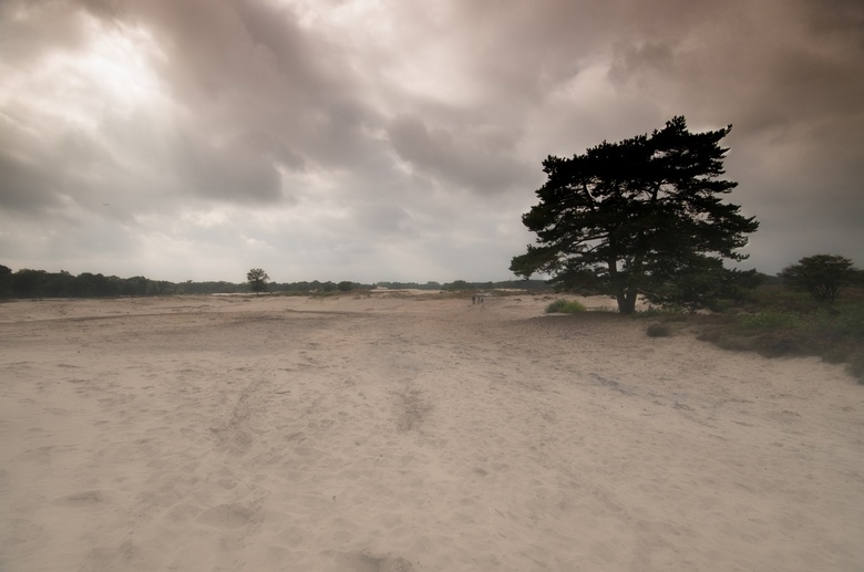 Zuiderheide Laren (NH) - Nevel op de Zuiderheide Laren (NH)<br />
