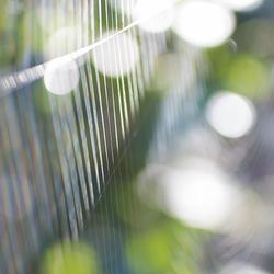 Spinnenweb bokeh