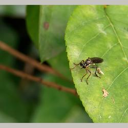 Insekten 5
