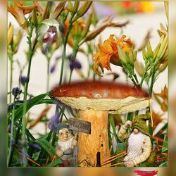 moet meedoen aan de paddenstoelenrage.............