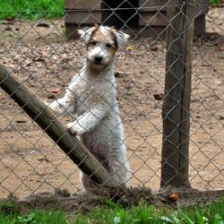puppy in ren van kennel