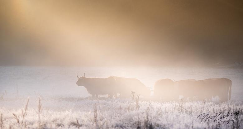 ochtend stralen op de kudde - de zonne stralen breken door de mist in de ochtend op de kudde.