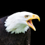 Bald Eagle Portret