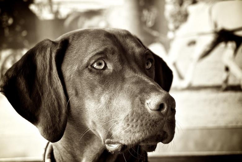 Binky - Dit is Binky, een prachtige hond die op een manage leeft.
