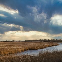 RIETKRAAG Lauwersmeer