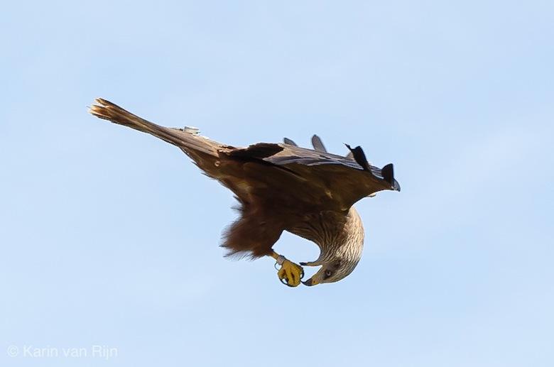 Vliegen en eten - Vliegen en eten