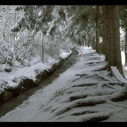 sneeuw  - landschap