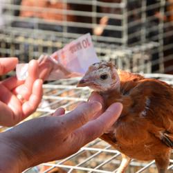 Op de markt is je tientje een kip waard.