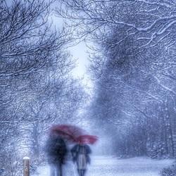 Vroege wandelaars in het besneeuwde bos.