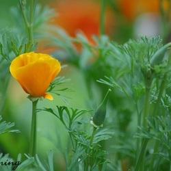 Eenzame bloem in het groen