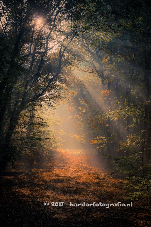 Herfsttijd in het Speulderbos