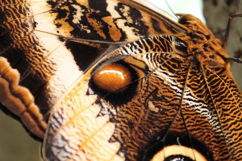 Vlinder in Artis - Vlinder in Artis (2013-02)