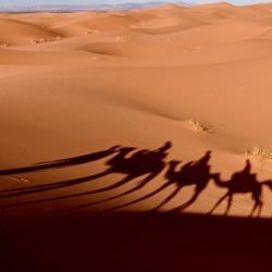 In colonne door de Sahara