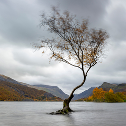 Wales, lonely tree