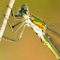 macro libelle