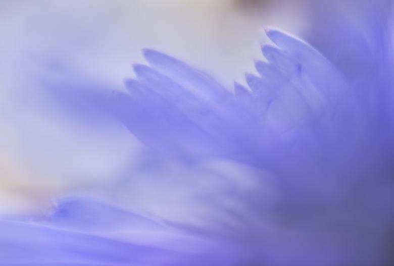 Wings of an angel - iedereen bedankt voor alle reacties op mijn vorige upload. lensbaby sweet 50 macro ring 20mm+8mm<br /> mvg.Remco