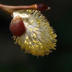 Bijensnoepje