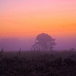 Goede morgen nederland 1
