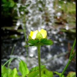 Spetterende bloem