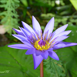 Flori Mundi Plantentuin Meise