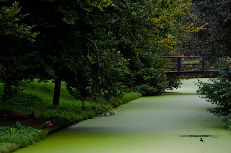 Bruggetje - bruggetje met herfstbomen