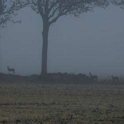 ree in mist